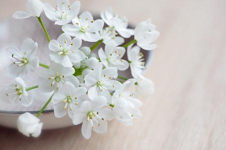 白い花,レイキサロンSono-mama